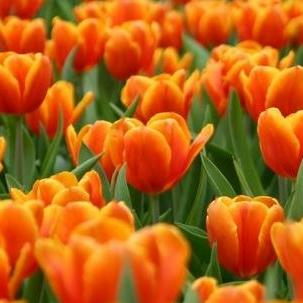 Pin Fiori Arancioni on Pinterest